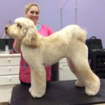 Rocky the LabraDoodle in the Show Doodle Clip
